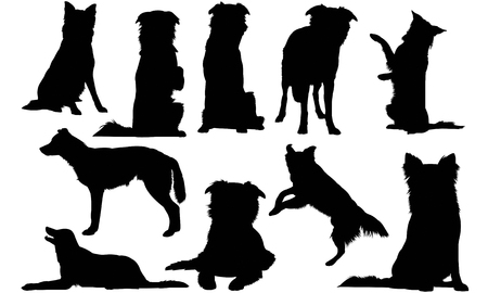 Illustration for Border Collie Dog silhouette illustration - Royalty Free Image