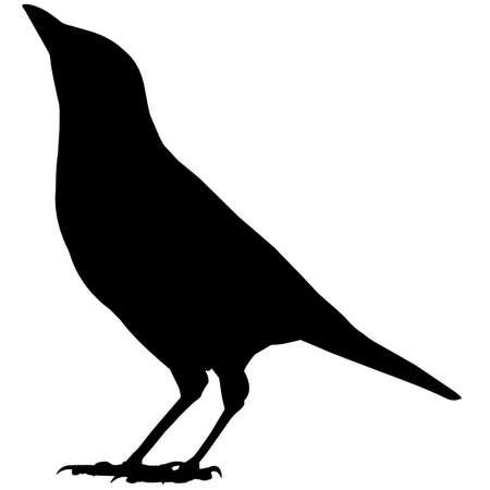 Illustration pour Magpie Silhouette Vector Graphics - image libre de droit