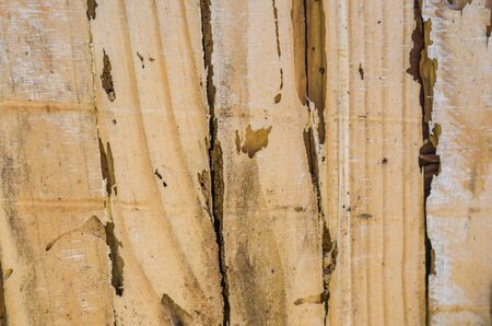 Foto de Wooden texture with termite. - Imagen libre de derechos