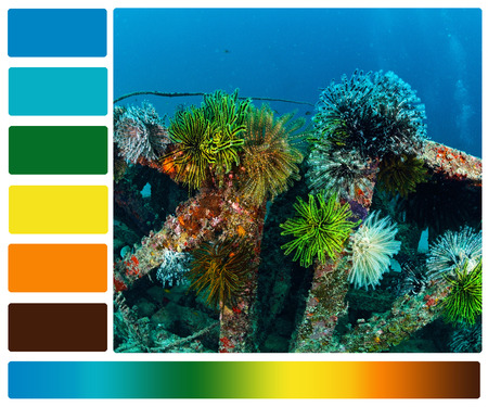marine life underwater with color palette swatches