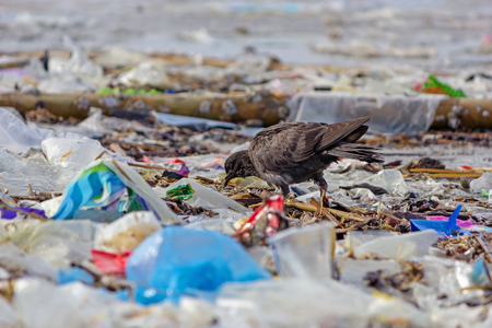 Photo pour Dove walking on garbage beach. - image libre de droit