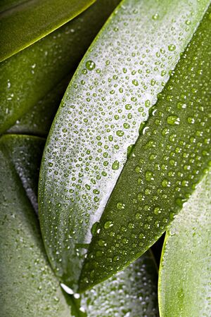 diversely plants with the morning dew