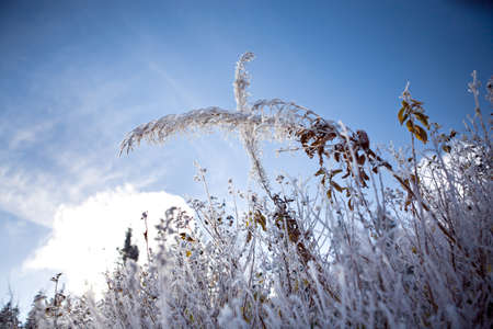 diversely plants covered with hoarfrost