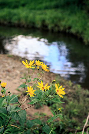 diversely plants at a small europian river