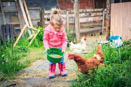 Foto de little girl feeding chickens in front of farm - Imagen libre de derechos