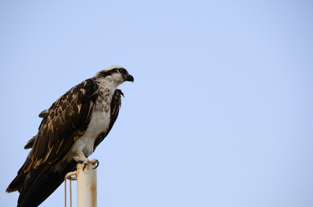 large sea eagle sittting at the beach and looks