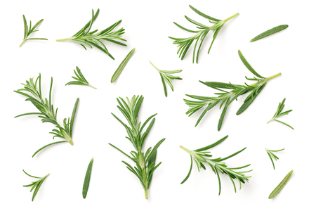 Photo for Rosemary isolated on white background. Flat lay. Top view - Royalty Free Image