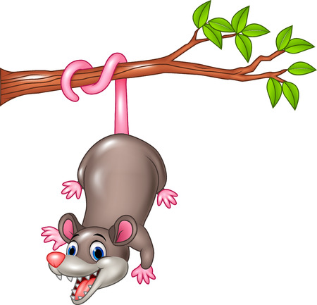 Illustration pour Vector illustration of Cartoon funny Opossum on a Tree Branch - image libre de droit
