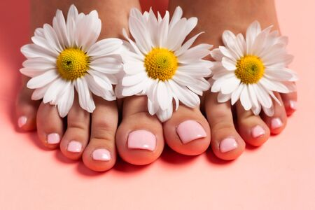 Photo for Foots of a girl in the flower buds of daisies, pink pedicure on a pink background. Top view with place for text. - Royalty Free Image