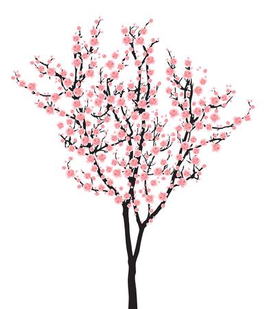 Illustration for One pink full bloom sakura tree (Cherry blossom) isolated on white background - Royalty Free Image