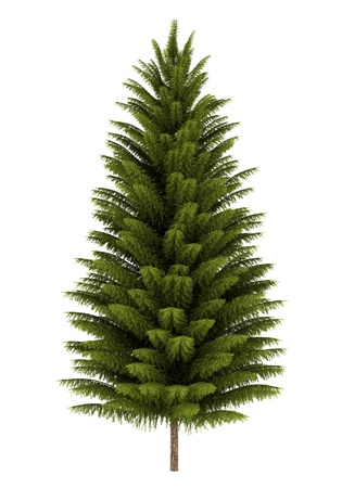 norway spruce tree isolated on white background