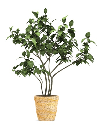 decorative plant in pot isolated on white background