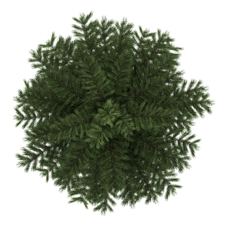 top view of scots pine tree isolated on white background