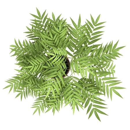 top view of decorative tree in pot isolated on white background