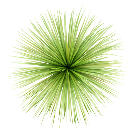 Photo for top view of potted palm tree isolated on white background - Royalty Free Image