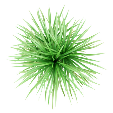 top view of potted dracena palnt isolated on white background