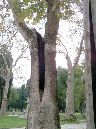 big hole on old tree