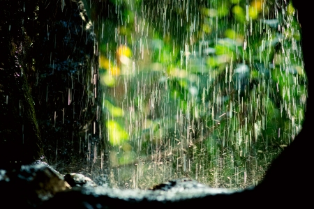 Rain drops in sunlight, natural backgroundの写真素材