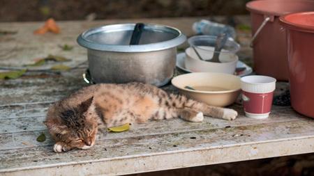 The kitten sleeping on the table near utensil. The shot made on the street of Thailand.