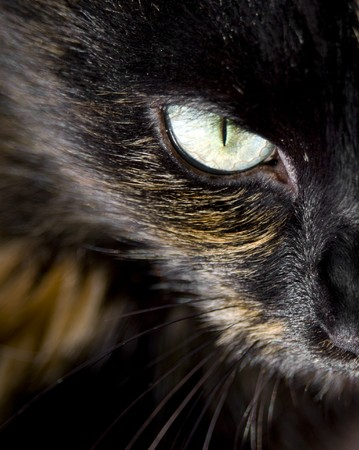 Close up of cat's eye staring at you