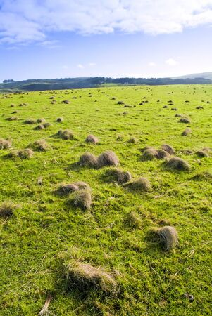 A paddock with green grass and clusters of growth