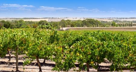 Famous wine region the Barossa Valley near Adelaide, South Australia