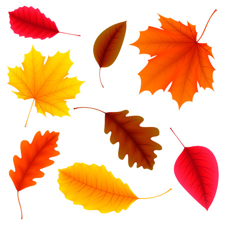 illustration of color autumn leaves on white background