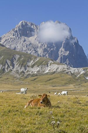 During the summer, countless cattle and horses grazing on the plateau of Campo Imperatore