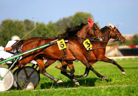 Two trotting horses