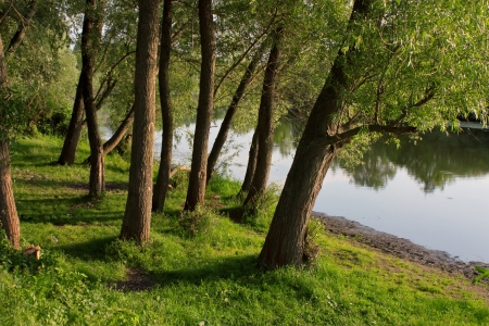 Beautiful landscape with trees, grass and river  in summer
