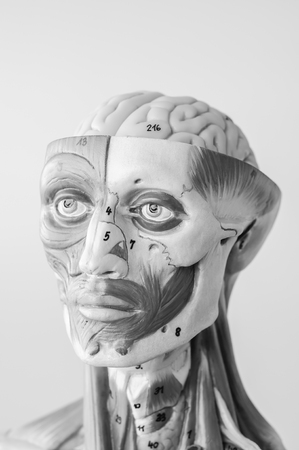 anatomy of human muscle model with black and white color