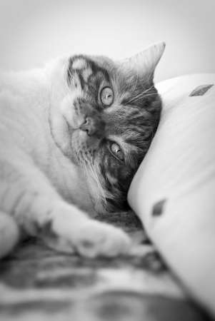 A beautifull cat awakening in the bed
