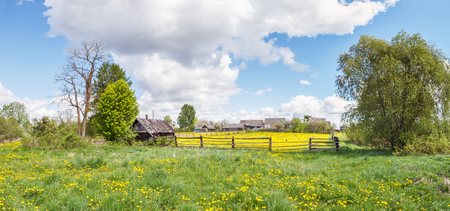 Dandelions on a site with a fence and a shed