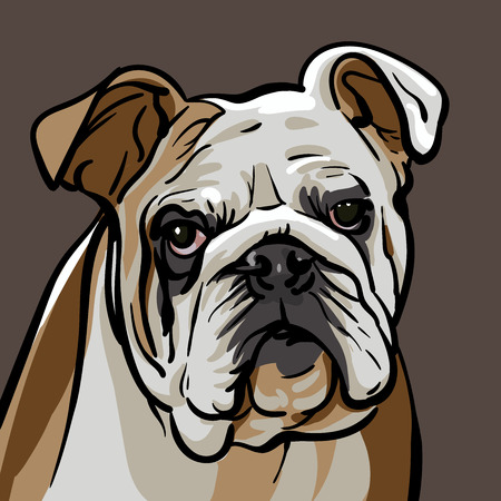 Illustration pour Bulldog flat vector illustration on brown background. - image libre de droit