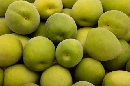 Photo pour Pile of Green plum fruits or Japanese apricot ,  Prepare to make plum wine - image libre de droit