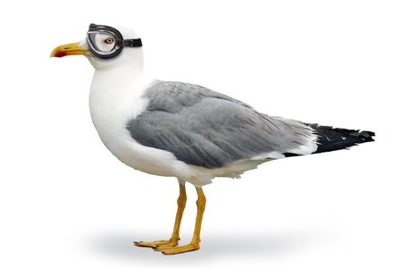 Photo for Seagull with goggles of pilot - Royalty Free Image