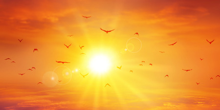 Panoramic warm sunset. Birds flight ahead the setting sun. High resolution sky background