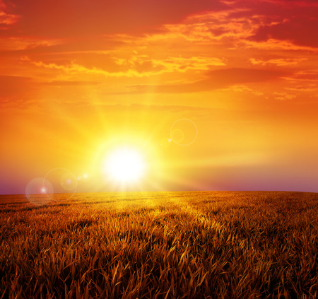 Foto de Warm sunset on the wild meadow. Intense sun setting down on a peaceful grass field - Imagen libre de derechos