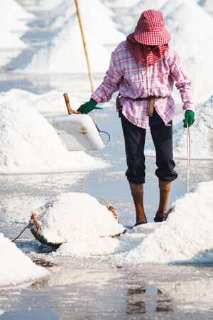 The Farmer working in the salt field