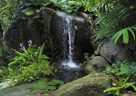 small mountain waterfall in the tropical jungle