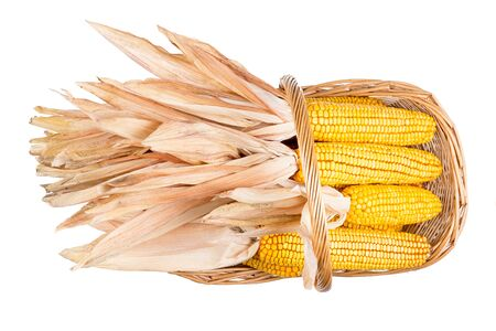 A whole basket filled with ripe corncobs isolated on white background