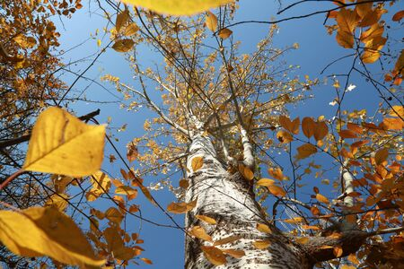 Photo pour Nature change & Life change - image libre de droit
