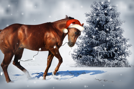 Photo for Christmas Horse - Royalty Free Image