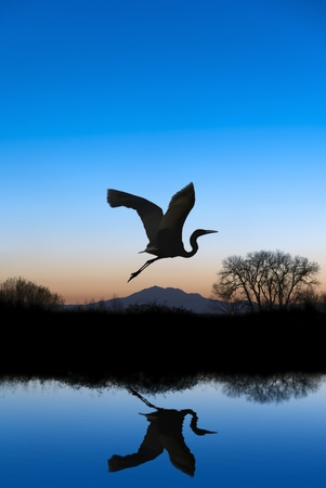 Photo pour Silhouetted Snowy Egret flying at sundown over quiet Winter pond on wildlife refuge, Mount Diablo in bacground, San Joaquin Valley, California - image libre de droit
