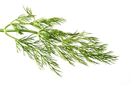 Sprig of dill weed