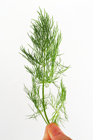 Sprig of fresh dill weed