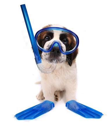 Funny Image of a Puppy Wearing Snorkeling Gear on White Background