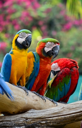 Colorful macaw resting on branches of tree