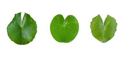 Photo pour Green leaf lotus flower on white background. - image libre de droit