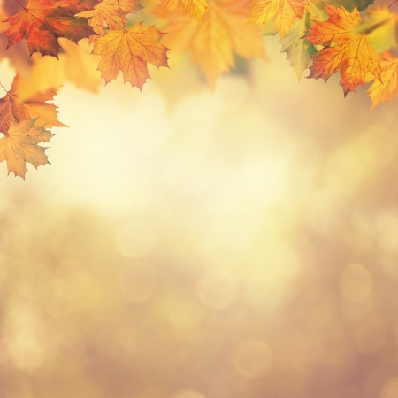 Abstract autumnal backgrounds for your designの写真素材